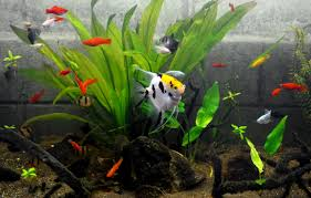 best alternatives to freshwater aquarium fish muni
