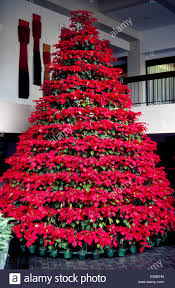 an eye catching christmas tree made with dozens of bright red live