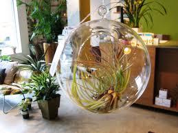 hanging glass globe terrarium sprout home chicago jan u2026 flickr