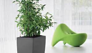 large office plants home design ideas and pictures
