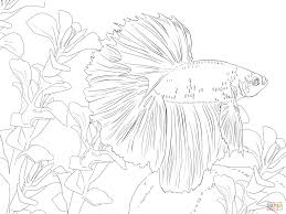 betta fish coloring page free printable coloring pages