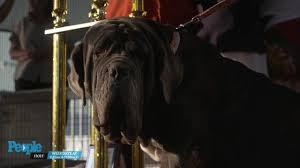 world u0027s ugliest dog contest 2017 dr evan antin video