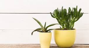 Plant For Bedroom 6 Trendy And Healthy Plants For Your Bedroom Design Entity