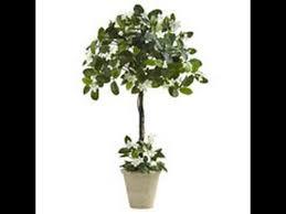 Outdoor Topiary Trees Wholesale - silk topiary trees cedar spiral tree sweet triple bay ball silk