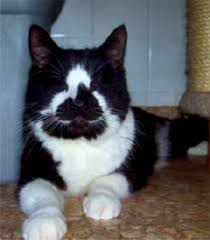 Blind Cat Sanctuary Blind Cat Rescue U0026 Sanctuary Inc Restoring Vision For A Bright