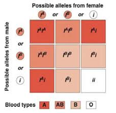 fhs bio wiki blood genetics