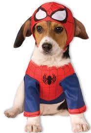 64 best halloween costumes for pets images on pinterest animal