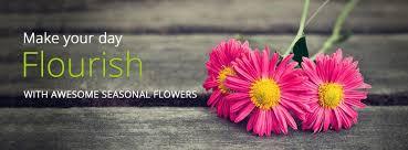 wedding flowers dubai black tulip flowers florists in dubai dubai florists flowers in