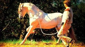 horseland u2013 movie klaus ferdinand hempfling