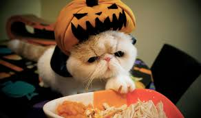 cute cats and dogs love halloween 2015 youtube