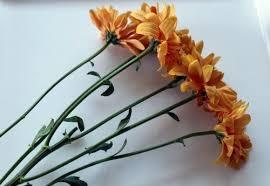 How To Make Flower Arra How To Create A Simple Chrysanthemum Flower Arrangement