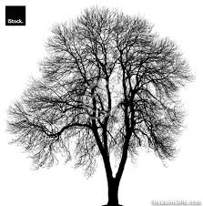 black trees isolated on white trees on white trees on white