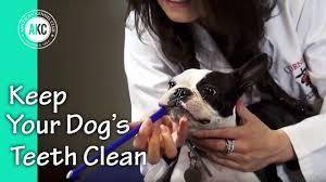 how to keep your dog u0027s teeth clean youtube