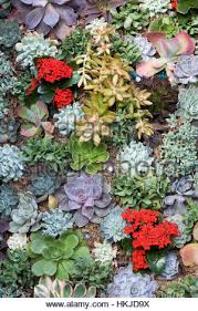 display of succulent drought tolerant plants in a geometric design