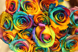 Colorful Roses Colorful Roses Wallpapers Wallpaper Albums
