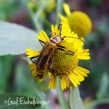 tennessee native plants clay and limestone pollinator of the week