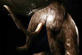 mammoth carbon dating