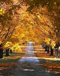 Bed And Breakfast Traverse City Mi Fall Packages Traverse City Vacation A Breath Of Heaven