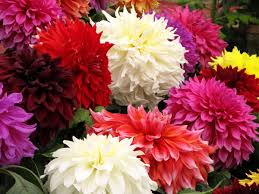 List Of Flowers by List Of Winter Flowers Probrains Org