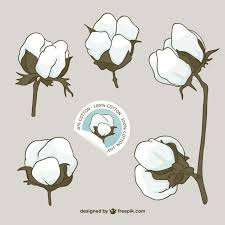 cotton flowers cotton flowers vector vector free