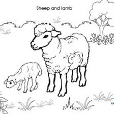 coloring pages sheep lamb kids drawing coloring pages marisa