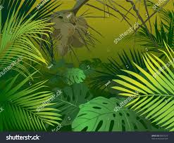 tropical rainforest native plants green jungle undergrowth vector illustration tropical stock vector