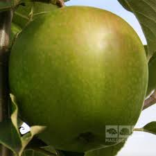 mail order fruit malus smith apple tree mail order trees