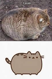 Pusheen Cat Meme - the real pusheen the meta picture