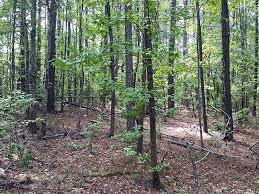 Alabama Forest images Oakridge woods ranch for sale valley chambers county jpg