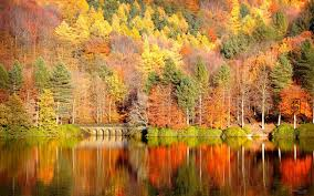 halloween autumn background pinterest autumn pin autumn red wallpaper nature on pinterest re