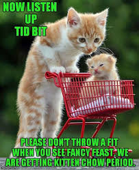 Funny Kitten Memes - cute kitten pictures impremedia net
