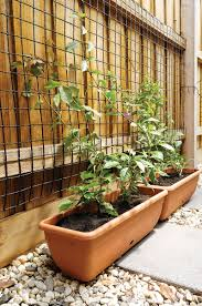 plastic trellis use a wire trellis for your plants coolaroo