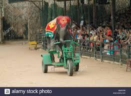 Nong Nooch Tropical Botanical Garden by Elephant Show Nong Nooch Pattaya Stock Photos U0026 Elephant Show Nong