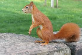 wild animals images Squirrel animals wild free photo on pixabay jpg