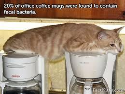 office coffee mugs fact kitty facts part 2 album on imgur