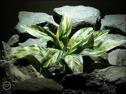 dracaena silk aquarium plant or silk reptile plant dracaena leaves