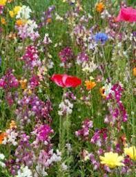 creating a wildflower bouquet