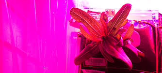 Plants That Grow In Dark Rooms by Experiment Helping Study Plant Growth In Space Nasa