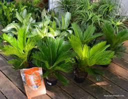 living wall cone container garden how to shawna coronado