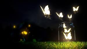 beautiful butterflies in the jar jpg
