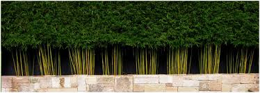 backyards mesmerizing bamboo backyard screen 103 fence bamboo