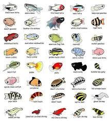 best 25 aquarium fish ideas on betta tropical fish