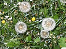 Types Of Flower Gardens Weed Soil Types What Weeds Say About The Landscape