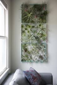 6 creative ideas for displaying air plants in your home air