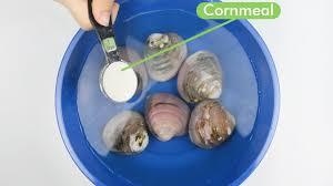 comment cuisiner les palourdes comment laver les palourdes 7 é avec des photos