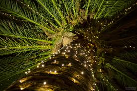 palm tree for lights decoration