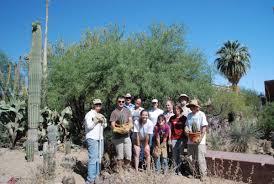 tucson native plants tucson cactus and succulent society restores the krutch garden