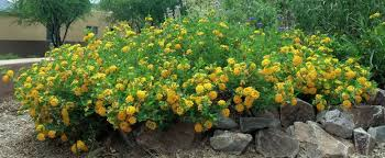 Heat Resistant Plants Rabbit Resistant Plants For Southwestern Gardens Civano Nursery Blog