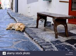 a dog sleeps on the street depicting the small town charm of