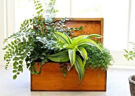 Indoor Plant Arrangements 14 Best Indoor Plant Decoration Ideas Images On Pinterest Indoor